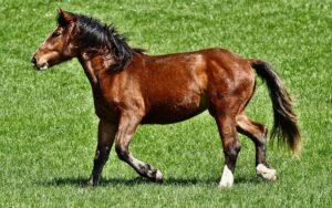 ridning_hest_