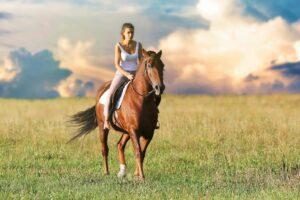 hest rytter