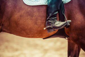 Penge_til_hesteudstyr