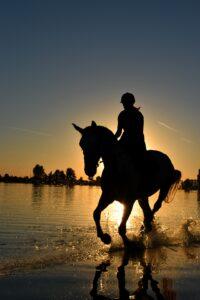 Rytter_hest_ride_strand_