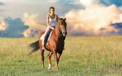 Forkæl dine hestepiger