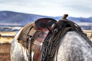 sadel - hesteudstyr