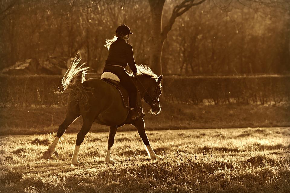 hest-med-rytter