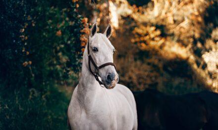 Få råd til en hest