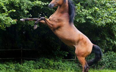 Gentlemansport til hest og til bens