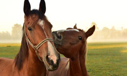 Sådan kan du sørge for, at din hest får et stressfrit liv