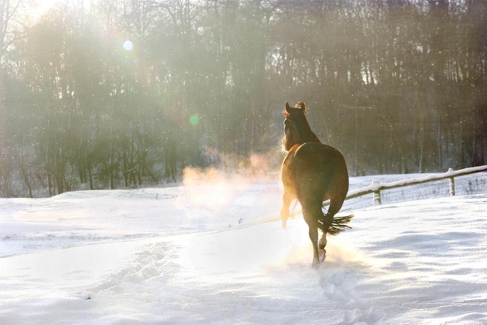 Hest i sne