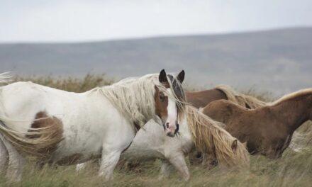 Sådan starter du din egen hesteblog