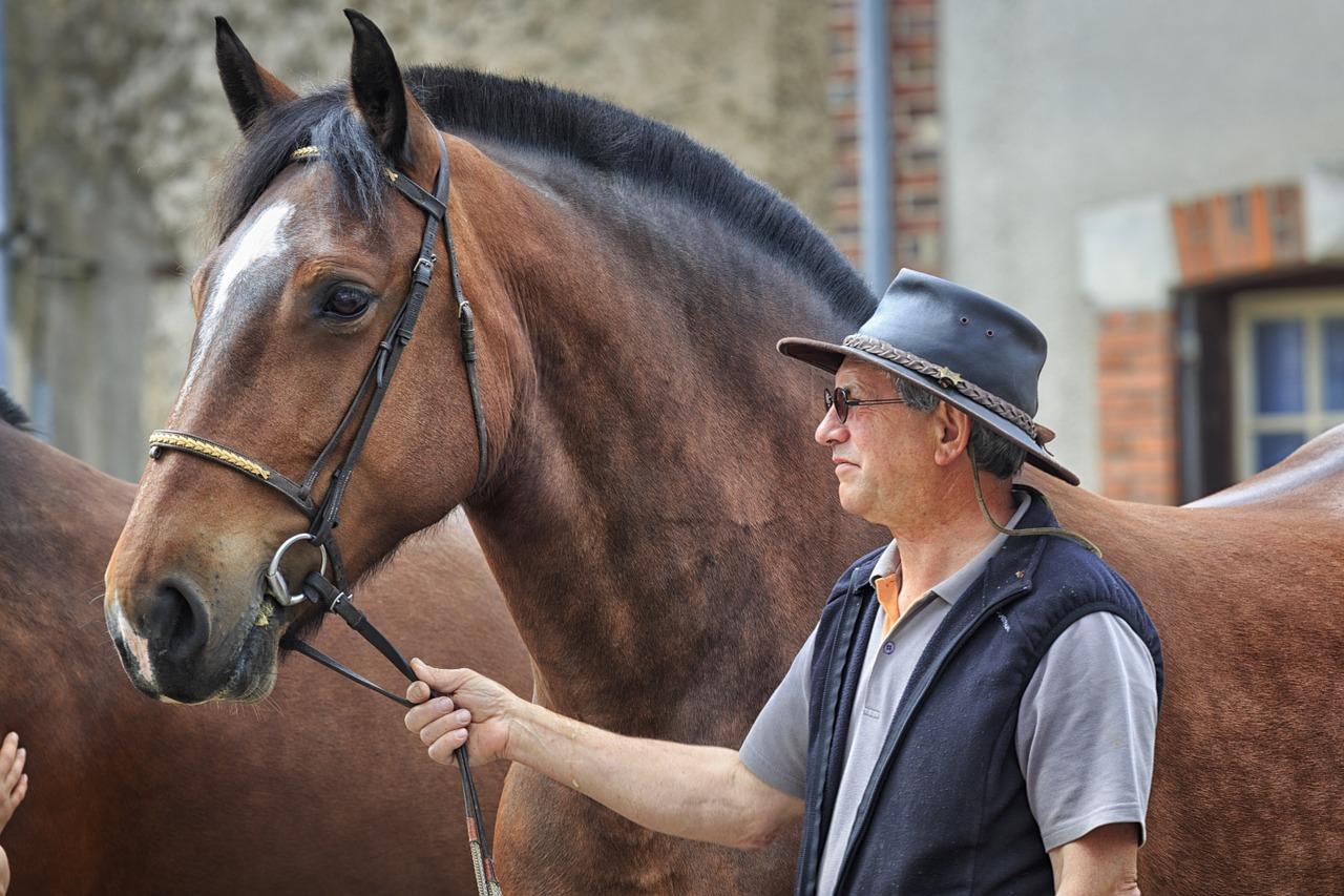 Mand og hest