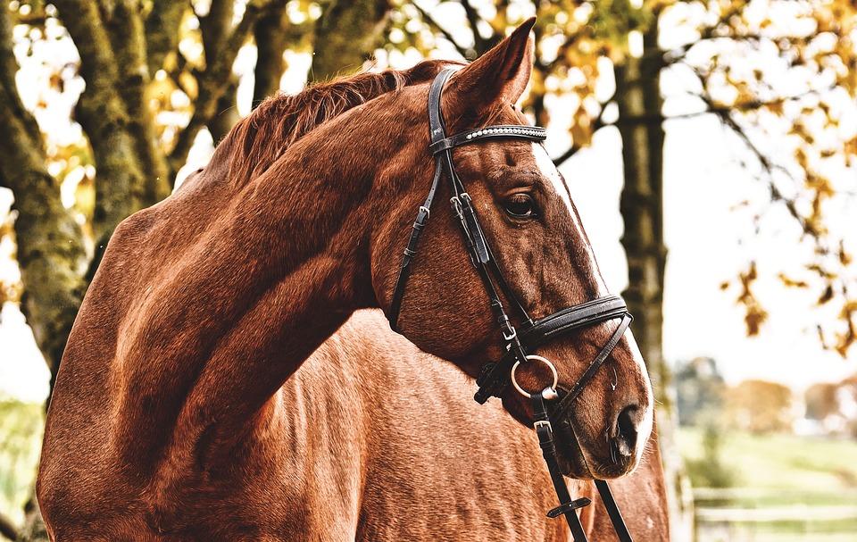 Få råd til din interesse i heste