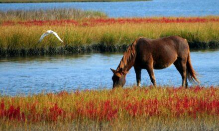 Råd til at holde hest: Kreative måder at tjene penge på