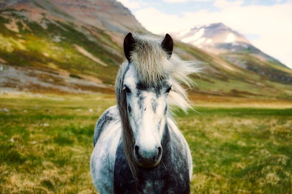 Seriøs hest