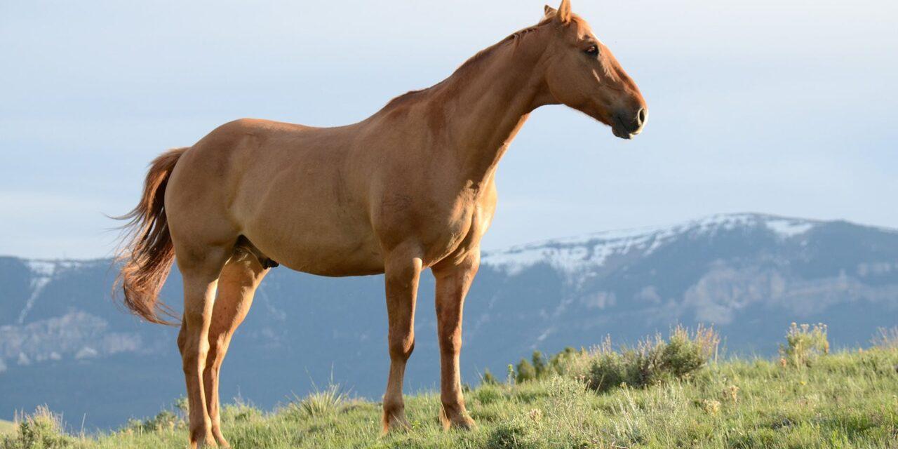 At holde hest er en dyr fornøjelse – men hver en krone værd