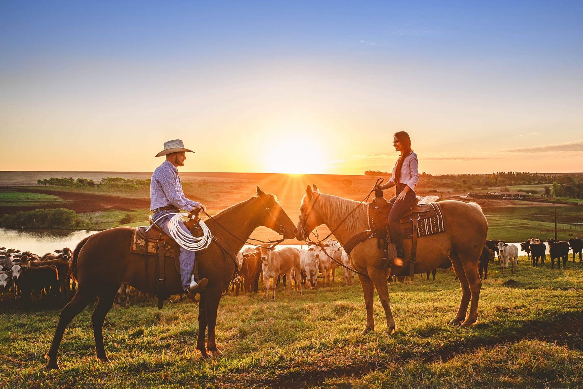 to ryttere på heste