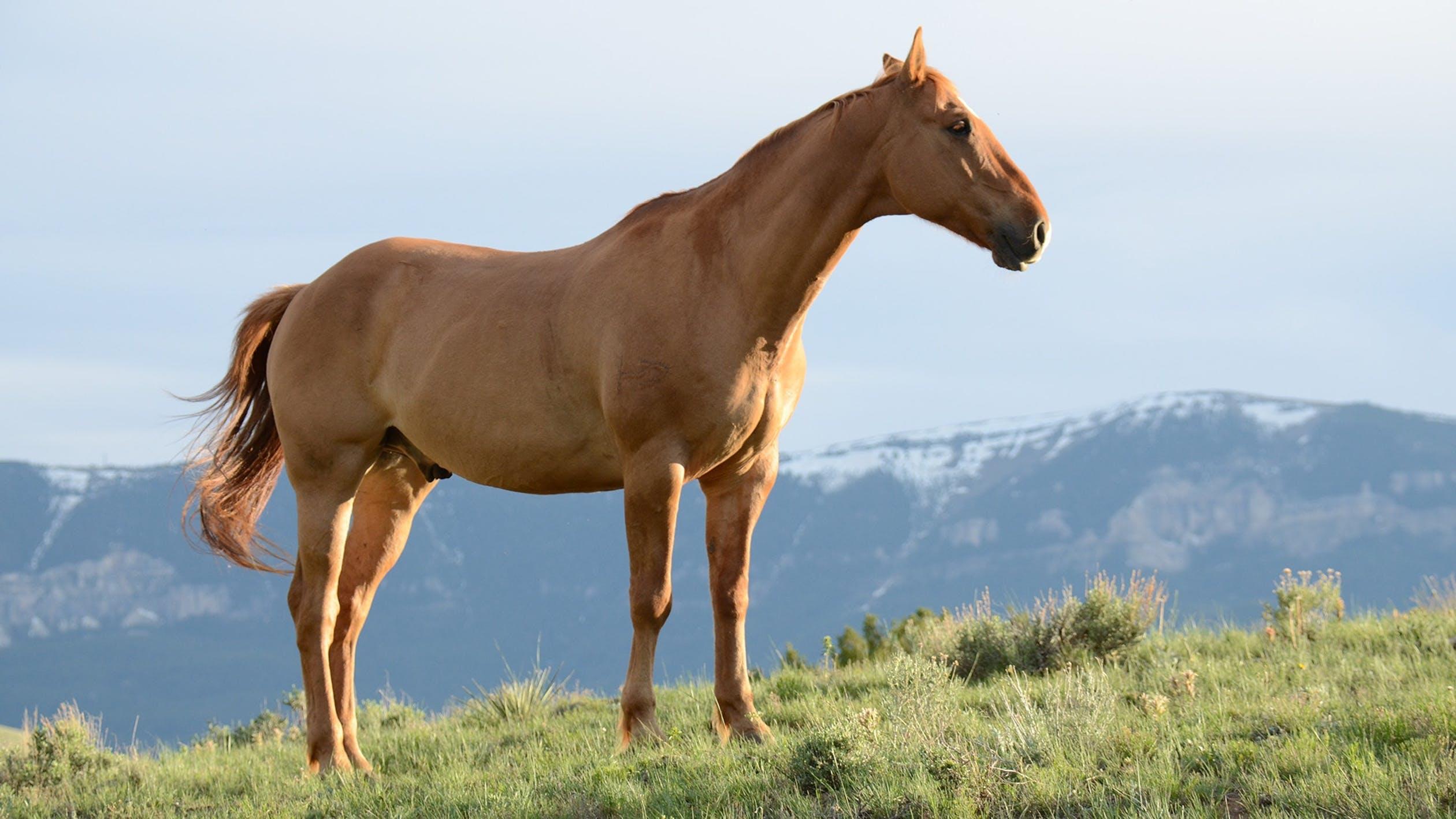 Hest på bjerget