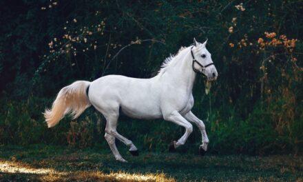 Lev det bedste liv med din hest
