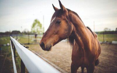 At have egen hest kræver meget arbejde, men det er det hele værd