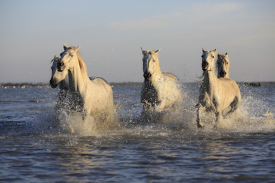 Heste skal vaskes i vand eller badebassin