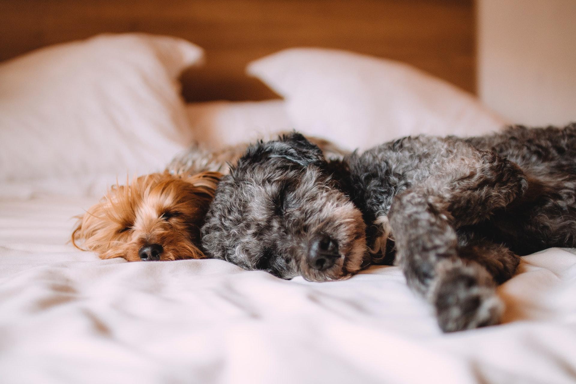 Hunde sover