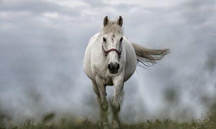 Urter er basis for hestens kost, men hvorfor?