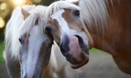 Er hesten din bedste ven?