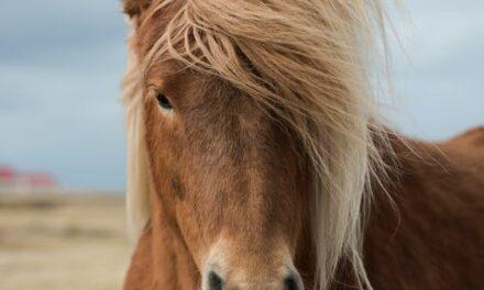 Find mere tid til dine heste