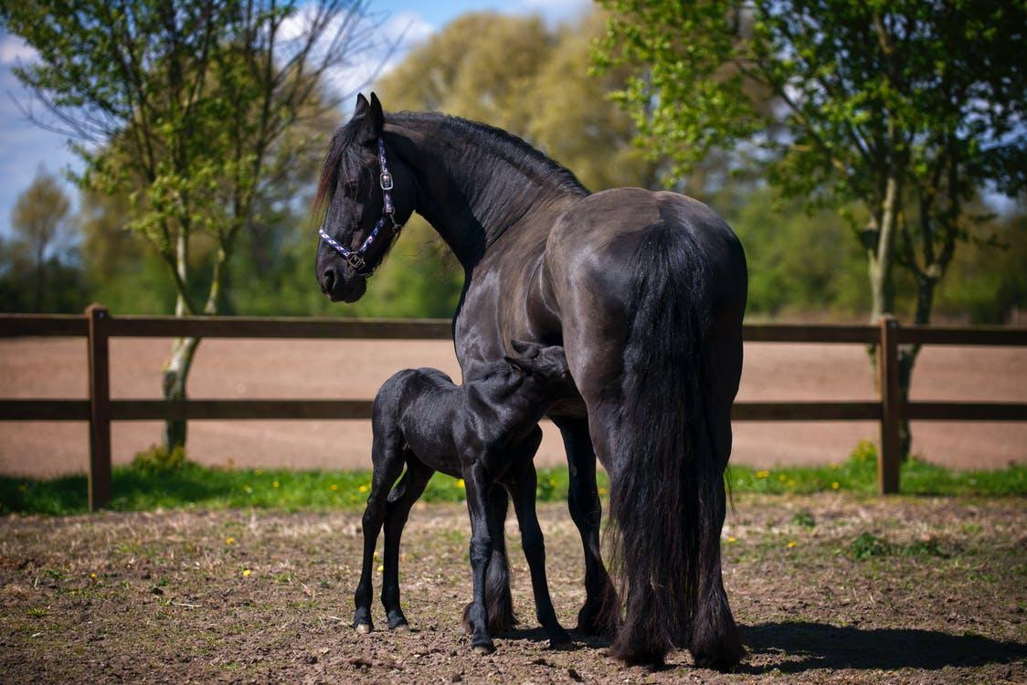Hestefamilie
