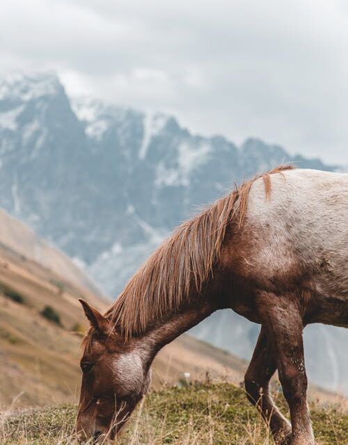 Overvejer du at starte en blog for andre hesteentusiaster