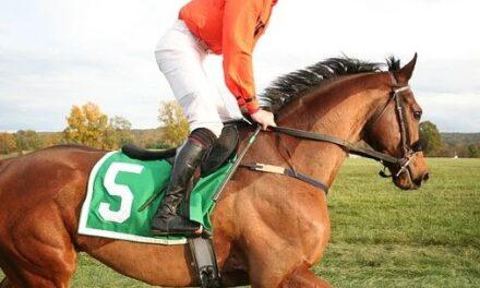 Spil på heste